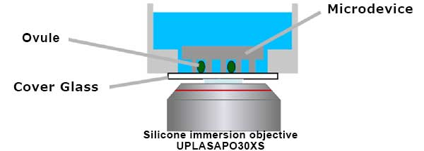 Schematic illustration of microdevice imaging with a silicone immersion objective