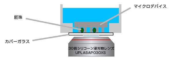30倍シリコーン浸対物レンズUPLASAPO30XSによるマイクロデバイス観察の模式図