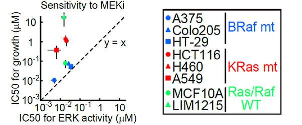 複数の癌細胞株におけるMEK1/2阻害剤(AZD6244)のERK活性に対するIC50と細胞増殖率に対するIC50の比較