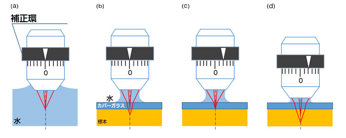 標本やカバーガラスによる球面収差の発生と補正環調整の効果を示す概念図