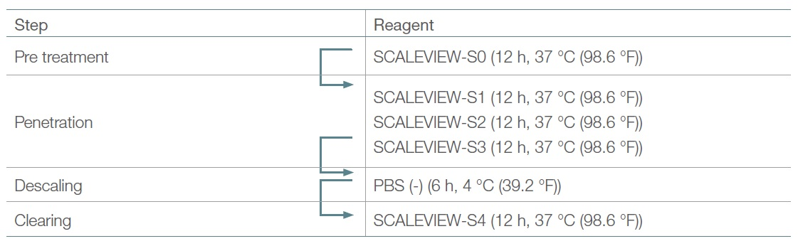 Table 1. Original SCALEVIEW-S protocol