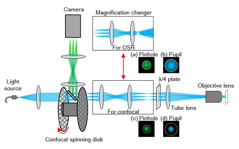 Figure 8. Structure of equipment's components. Optical system for magnification is switched depending on the purpose. For observation using OSR, the magnification system that optimizes pinhole size and occupies the full pupil of the objective is used. For confocal observation, the magnification system that enables observation across a wider field of view is used.
