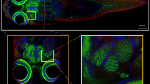 Light Sheet Microscopy – New multi-resolution and -color imaging methods