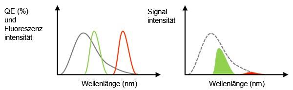 Abbildung 3: Die graue Linie ist die QE einer Kamera. Die grüne und die rote Linie zeigen das Fluoreszenzemissionsspektrum (links).Der erfasste Signalwert entspricht der Flächengröße, die ein Multiplikator der QE und der Fluoreszenzspektren in der linken Abbildung ist (rechts). Auch wenn das Fluoreszenzlicht eine ausreichende Intensität aufweist, könnte in diesem Fall das erfasste Signal der roten Fluoreszenz aufgrund einer niedrigen QE schwach sein.