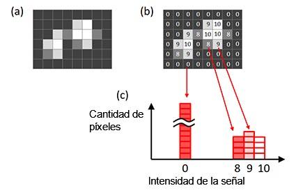 Figura 6 - Histograma de una imagen. a) Imagen original; b) intensidad de la señal de cada píxel proyectado en la imagen original; c) histograma creado a partir de la imagen original.