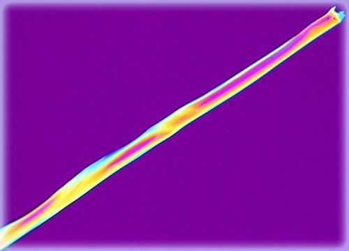 Bombyx mori Reeled Silk Fiber