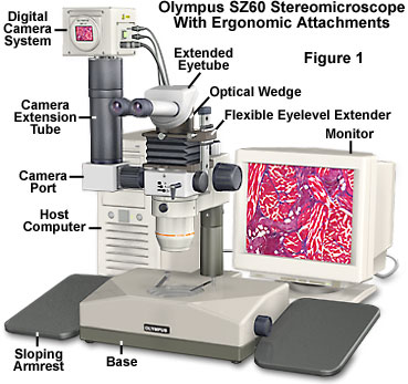 Microscope ergonomics introduction to microscope ergonomics but most of the new developments and improvements have been in the area of contrast enhancement accessories and the microscope optical train ccuart Images