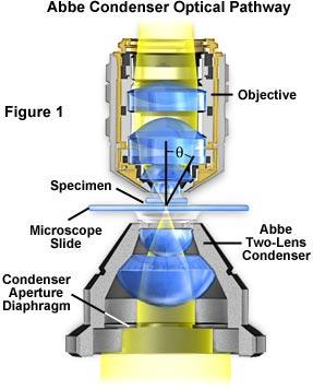 Datazione Spencer microscopi