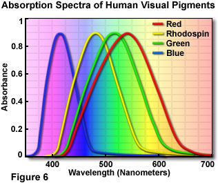 16c912f7860 The Physics of Light and Color - Human Vision and Color Perception ...