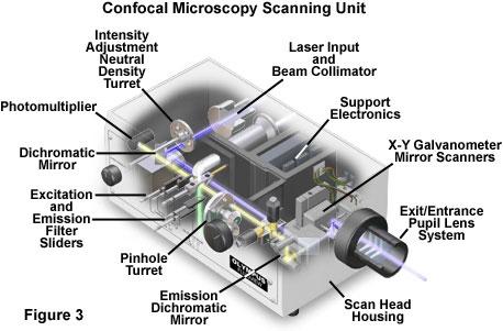 Confocal Microscopy Introduction