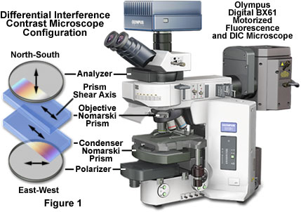Differential Interference Contrast Fundamental Concepts