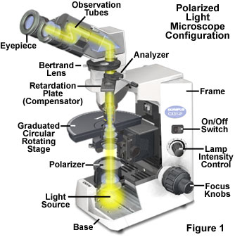 the basic optical and mechanical components of a polarized light microscope  are illustrated in figure 1  at a minimum, these microscopes must be  equipped