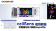cellSens analysis-use Lineprofile to measure intensity