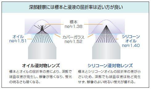 屈折率ミスマッチによる深部観察への影響