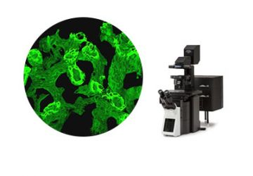 Confocal Imaging
