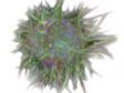 Fluoreszenzbildanalyse – Invasion von 3D-Sphäroiden in ein Kollagengel